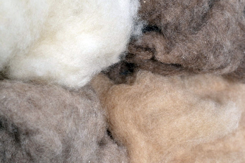 Dehaired Cashmere, Camel amp; Baby camel wool